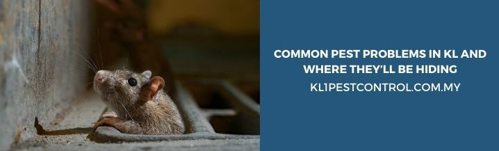 Common Pest Problems in KL