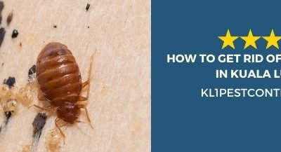 How To Get Rid of Common Bugs in Kuala Lumpur?