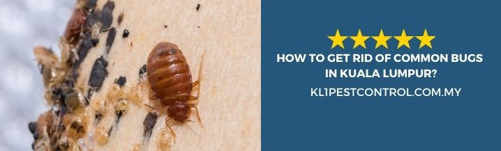 How To Get Rid of Common Bugs in Kuala Lumpur
