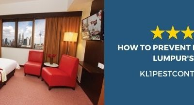 How to Prevent Pests in Kuala Lumpur's Hotel