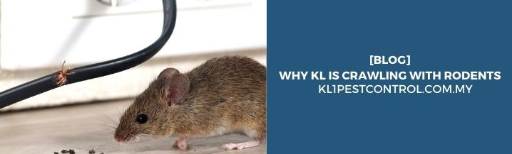 Why KL is Crawling with Rodents