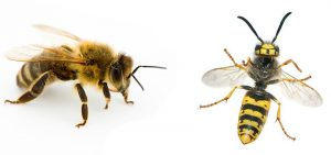 bees and wasp