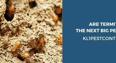 Are Termite in KL the Next Big Pest Problem?