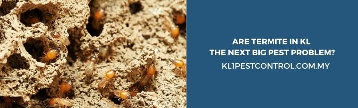 Are Termite in KL The Next Big Pest Problem
