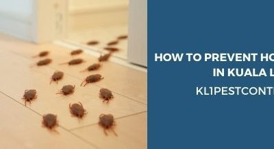 Best Ways To Prevent Home Pest Infestation in Kuala Lumpur