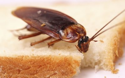 Signs Of Pest Infestation You Should Learn To Look Out For