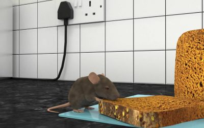 What Do Exterminators Do About Mice in Puchong?